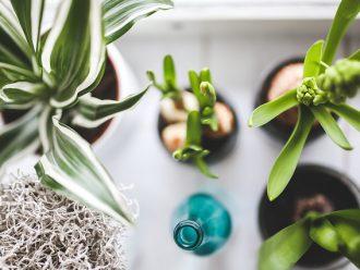 Bien chez soi avec les plantes dépolluantes